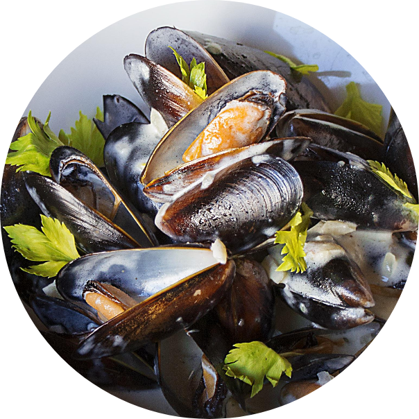 Blue mussels in cream sauce